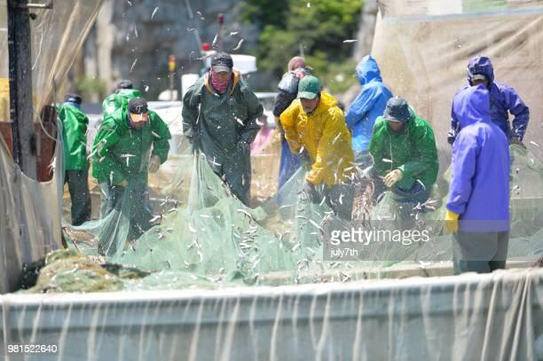Anchovy Fishermen