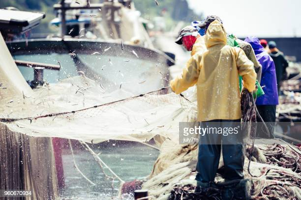 Anchovy Fishery in Korea