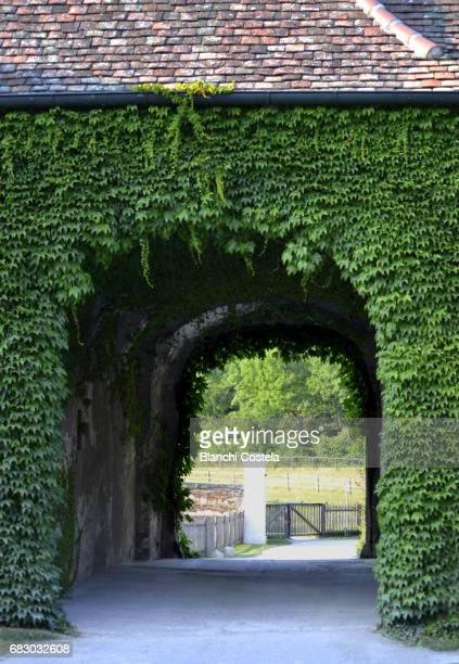 Ancient arch  covered with ivy