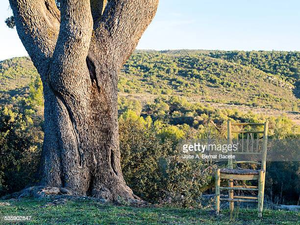 Ancient chair of wood in the shade of a great tree