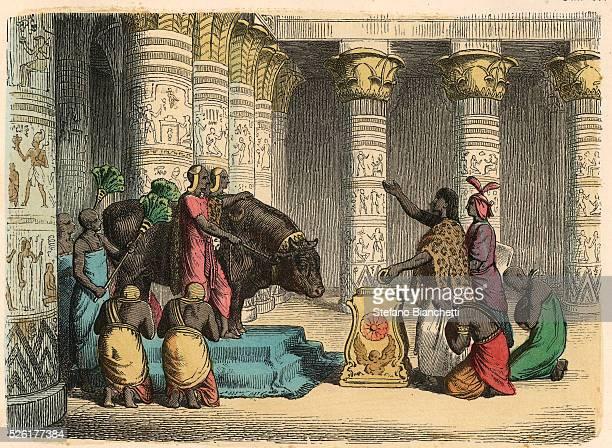 Worship of Apis Bull Coloured engraving by Heinrich Leutemann Bilder aus dem Altertume 1866
