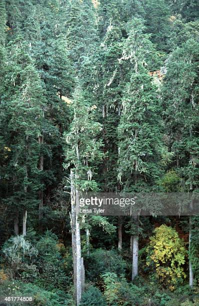Ancient fir trees in the Dulong Valley A remote valley bordering China and Burma the Dulong Valley has long been removed from the outside world as...