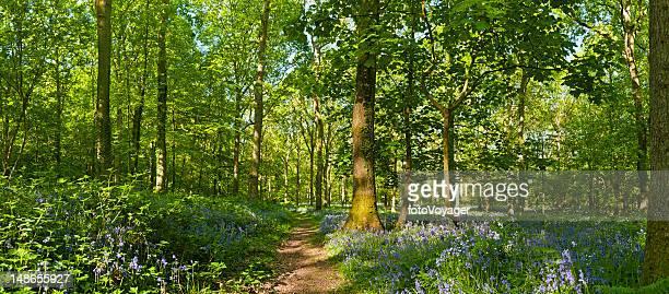 Alte grüne Wald idyllisches Wandern durch Wildblumen im Sommer Landschaft panorama