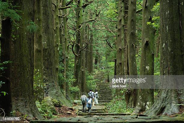 ancient japanese pilgrimage trail - pilgrimage stock pictures, royalty-free photos & images