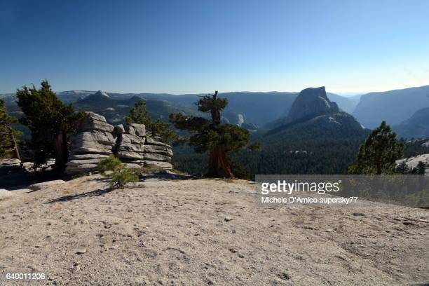ancient juniper trees on the yosemite granite and the half dome - western juniper tree stock pictures, royalty-free photos & images