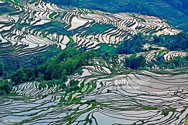 ancient rice terraces - yuanyang imagens e fotografias de stock