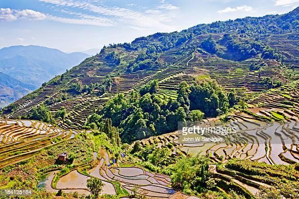 ancient rice terraces, yuanyang, yunnan, china - yuanyang stock-fotos und bilder