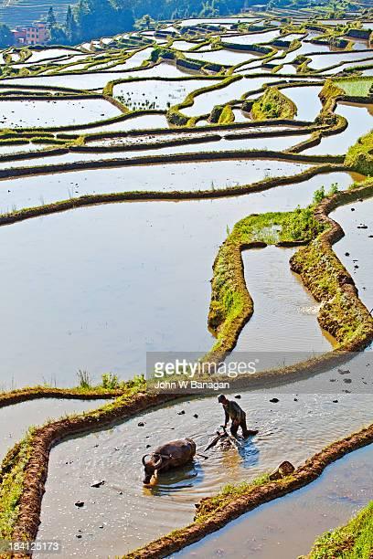 Ancient rice terraces. Yuanyang, Yunnan, China
