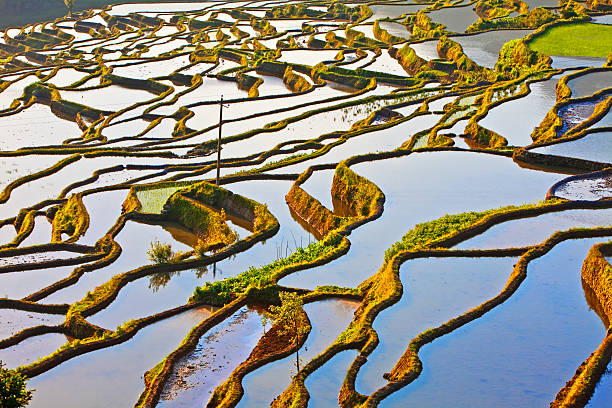 Ancient rice terraces, Yuanyang, Yunnan, China