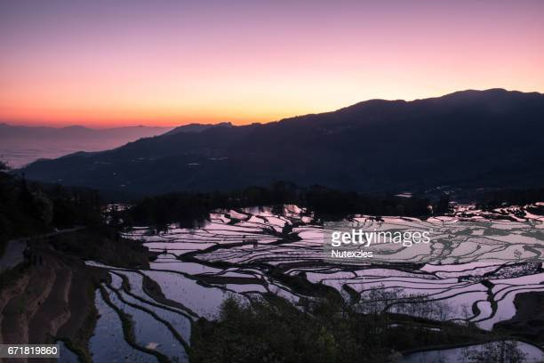 ancient rice terraces, yuanyang, yunnan, china - yuanyang stock pictures, royalty-free photos & images