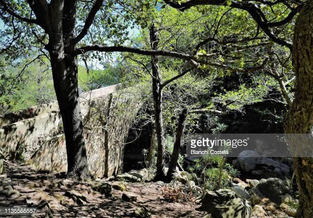Ancient roman bridge in the natural park of Los Alcornocales Trees , Cork oak forest , in Cadiz