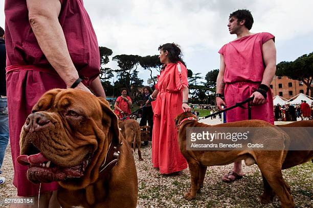 Ancient Roman costumed groups of people parade in the ancient areas of Colosseum , Circus Maximus and the Roman Forum to celebrate the festivities of...