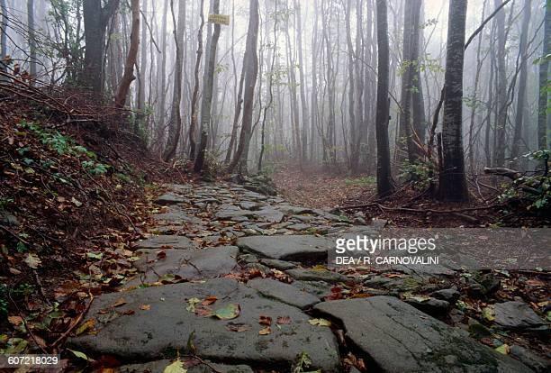 Ancient Roman road on Mount Bastion Tuscany Italy Roman civilisation