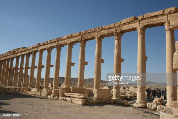 Ancient ruins in PalmyraSyria 05 May 2016 Syrian troups supported by the Russian Armed Forces have recaptured the city occupied by militant group...