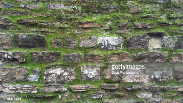 ancient stone wall covered with moss texture in florence, italy - castle stock pictures, royalty-free photos & images