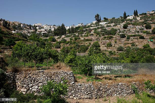 ancient terraces of battir - palestinian territories stock pictures, royalty-free photos & images