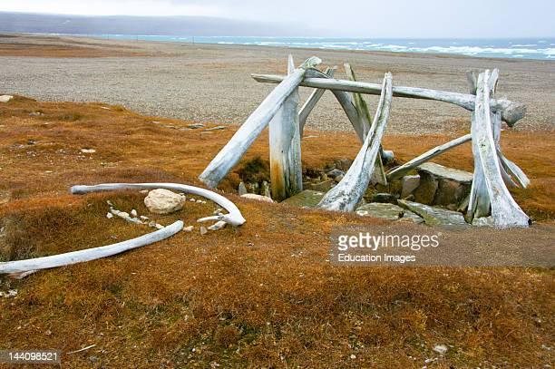 Ancient Thule Site Near Resolute Bay Nunavut Arctic Canada