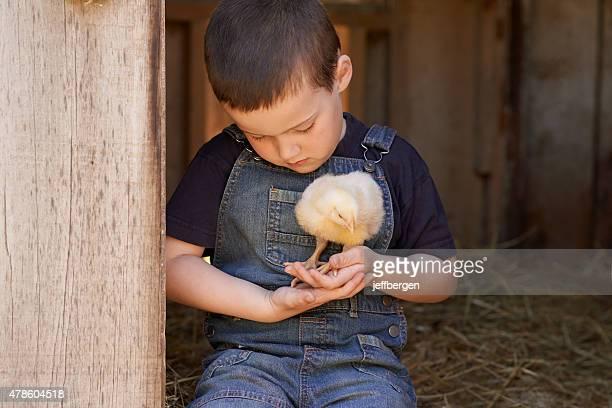 And a cluck-cluck here, and a cluck-cluck there…