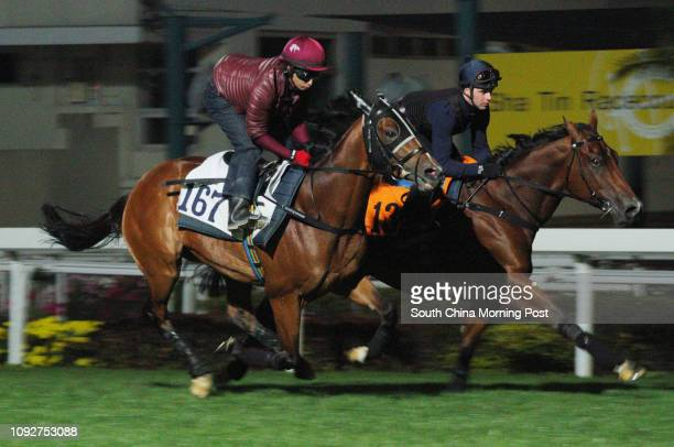 PARAGON and BOOMING DELIGHT ridden by Sam Clipperton galloping on the turf at Sha Tin 24JAN17
