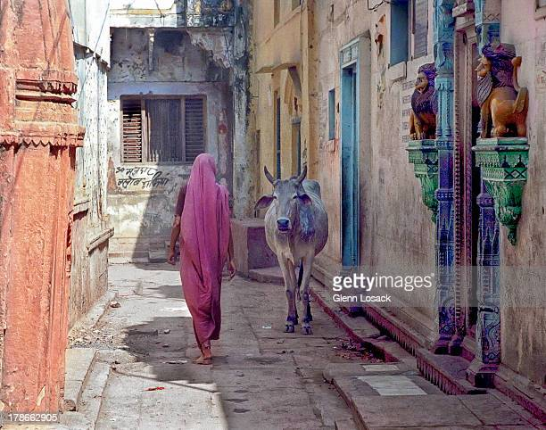 INDIA/ LADY and COW