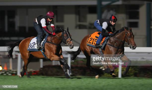 PARAGON and HAIR TRIGGER ridden by Sam Clipperton galloping on the turf at Sha Tin 16MAR17