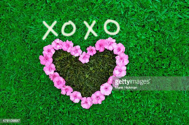 XOXO and heart shape with pink flowers on grass