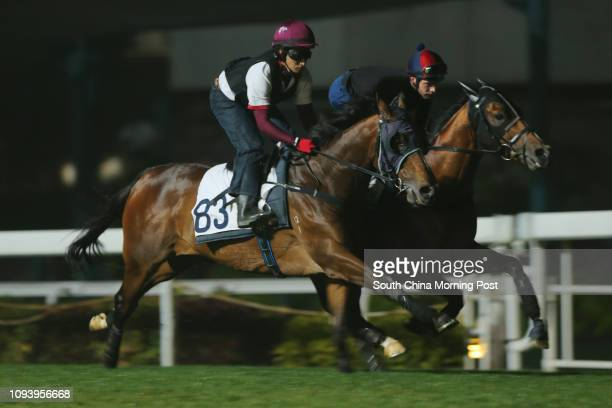 WERTHER and HELENE PARAGON ridden by Sam Clipperton galloping on the turf at Sha Tin 23FEB17