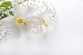 Lilies and others in a white background