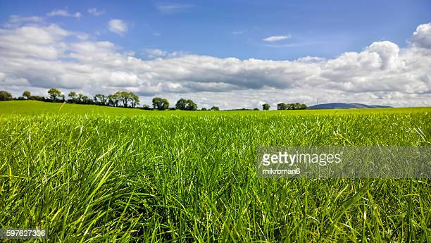 hq and res grassy field on summer sunny day. - focus on foreground stock pictures, royalty-free photos & images