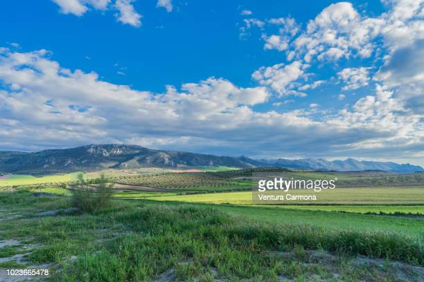 andalusian landscape - granada spain stock pictures, royalty-free photos & images