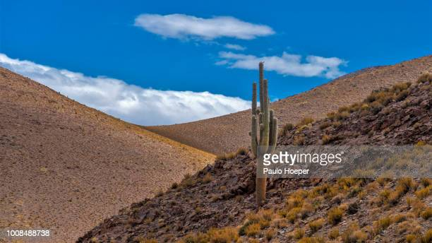andes and atacama. - salta argentina stock photos and pictures
