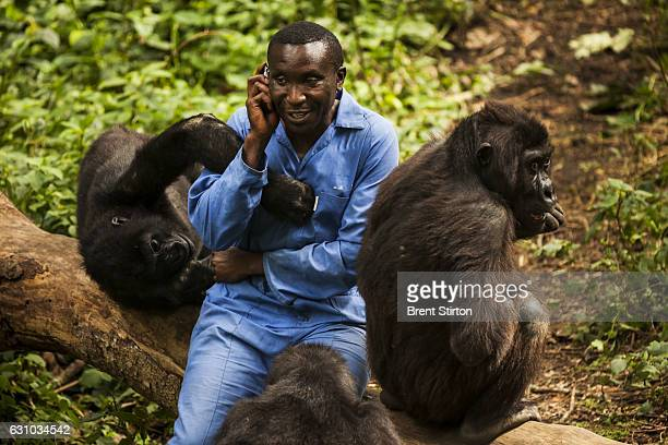 Andre a self described gorilla mother looks after 4 orphaned gorillas who were rescued from various horrific circumstances and brought into care by...