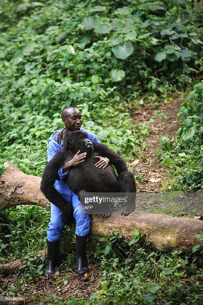 Andre Bahuma, a warden at the Virunga Na : News Photo