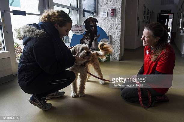 Andrea Brewer L a shelter volunteer greets Minnow a Sapsaree adopted by Abbie Hubbard R the deputy director of the Animal Welfare League of...