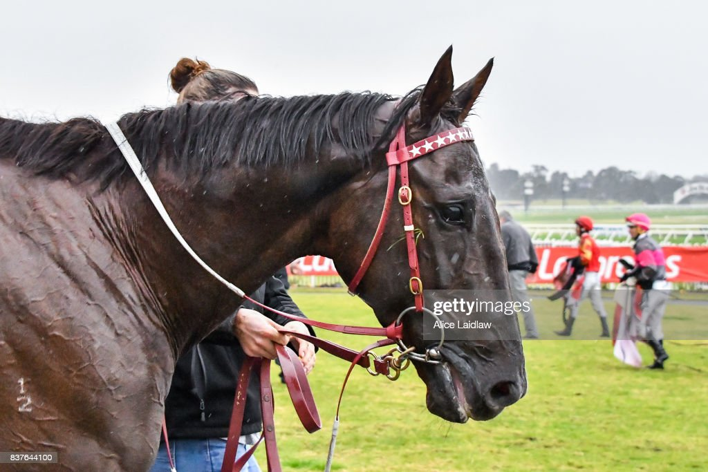 Andrea Mantegna (USA) after winning the Le Pine Funerals Handicap at Ladbrokes Park Hillside Racecourse on August 23, 2017 in Springvale, Australia.