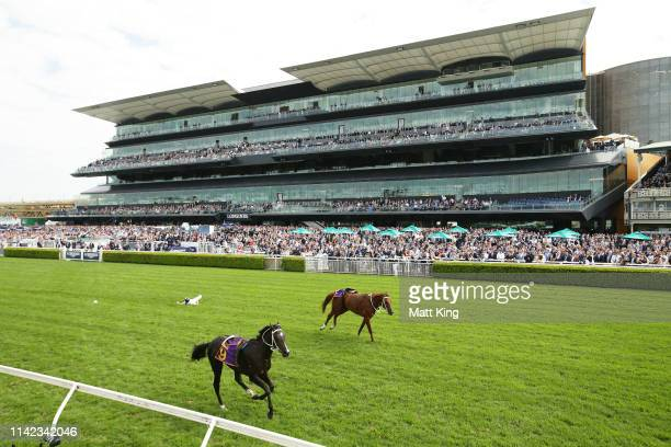 Andrew Adkins riding War Baron falls in race 1 the Kings of Sydney Sport Mile during The Championships Day 2 at Royal Randwick Racecourse on April 13...