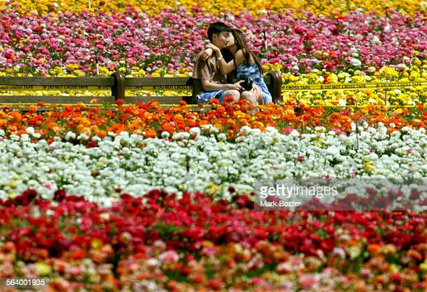 –Andrew Lee and his girfriend Belinda Lee take a front row seat in front of the blooming ranuculus at The Flower Fields in Carlsbad The 50–acre...