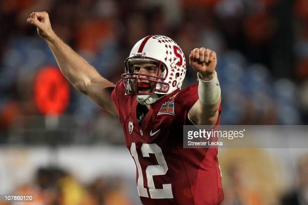 Andrew Luck of the Stanford Cardinal celebrates after he threw a 38yard touchdown pass in the fourth quarter against the Virginia Tech Hokies during...