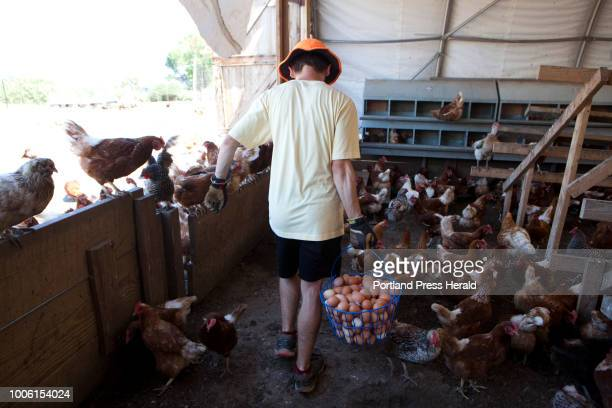 Andrew Tinkham of Gorham gathers eggs at Orchard Ridge Farm in Gorham on Friday July 20 2018 Orchard Ridge Farm has more than 1000 chickens that...