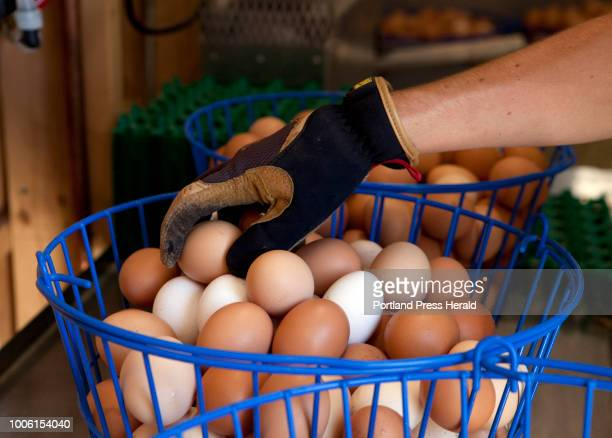 Andrew Tinkham of Gorham sorts eggs at Orchard Ridge Farm in Gorham on Friday July 20 2018 Orchard Ridge Farm has more than 1000 chickens that...