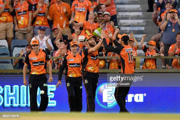 Andrew Tye of the Scorchers is congratulated by team mates after taking a catch to dismiss Nic Maddinson of the Sixers during the Big Bash League...