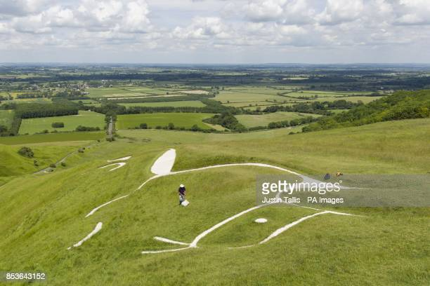 Andy Foster of the National Trust biological survey team uses a sweep net to assess conditions for nature conservation around the Uffington White...