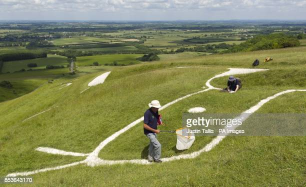 Andy Foster of the National Trust biological survey team uses a sweep net, whilst colleague and plant ecologist, Richard Allen , takes down notes, as...