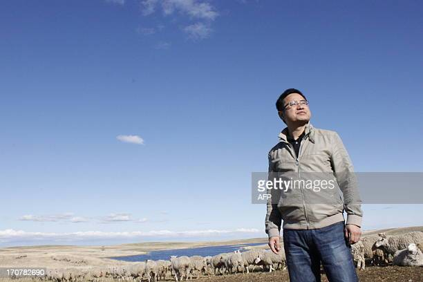 """Andy Hu inspects sheep on his farm in Ogema, Saskatchewan, on May 24, 2013. His plan is to turn it into the biggest in Canada in """"2 or 3 years"""" and..."""