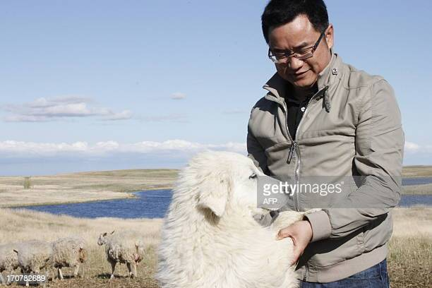 Andy Hu plays with his dog as he inspects sheep on his farm in Ogema, Saskatchewan, on May 24, 2013. His plan is to turn it into the biggest in...