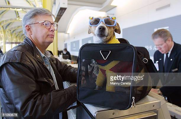 F Andy Messing Jr Checks In At An Airline Counter With His Pet 'Dick The Dog' For A Flight To St Petersburg Florida January 18 2002 At Washington...