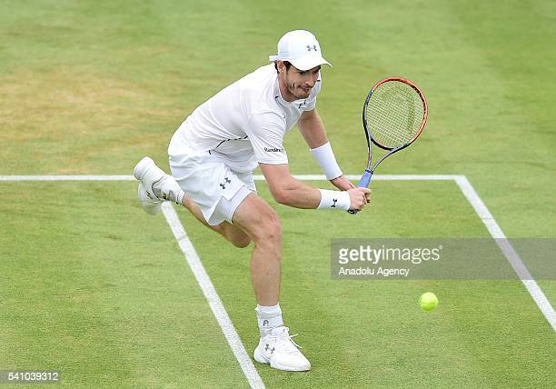 Andy Murray of Great Britain in action during his semi final match against Marin Cilic of Croatia during day six of the Aegon Championships at The...
