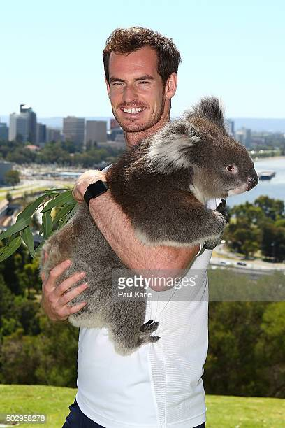 Andy Murray of Great Britain poses with Sunshine the Koala at Kings Park on December 31 2015 in Perth Australia