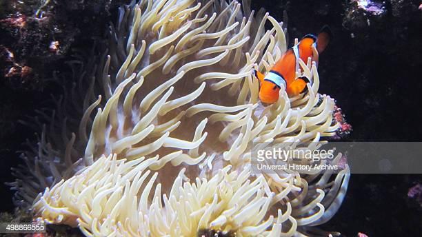 Desmond Morris Collection/UIG via Getty Images