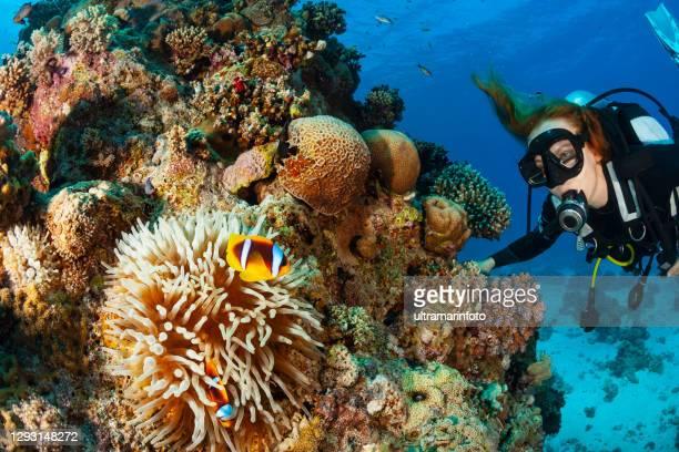 アネモネフィッシュ - カクレクマノミ水中海の生命サンゴ礁水中写真スキューバダイバー視点。背景にブロンドの女性のスキューバダイビング - スクーバダイビングの視点 ストックフォトと画像